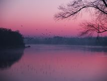 Pink morning stock images
