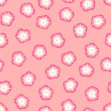 Pink Morning Glory Flower on Pink Background. Vector Illustration.  vector illustration