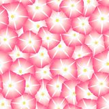 Pink Morning Glory Flower Seamless Background. Vector Illustration.  royalty free illustration