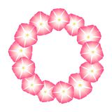 Pink Morning Glory Flower Wreath. Vector Illustration.  royalty free illustration