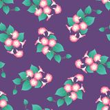 Pink Morning Glory on Purple Background. Vector Illustration.  vector illustration