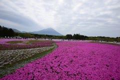 Pink moss. At fuji festival Royalty Free Stock Image