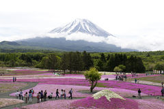 Pink moss at Mt. Fuji Stock Photography