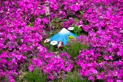Pink Moss Rose Field at Fuji Mountain. Stock Photo