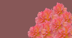 Pink mothers day floral border Stock Photo