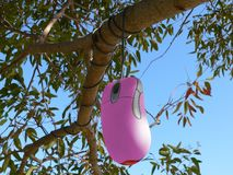 Pink Mouse Hanging from Tree Royalty Free Stock Images