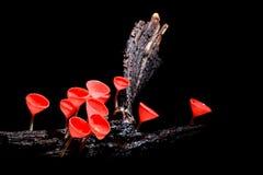 Pink mushroom Stock Photography