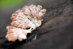 Pink mushroom Stock Images