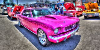 Pink Mustang Stock Images
