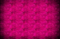 Pink natural roses background Royalty Free Stock Photography