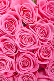 Pink natural roses background Stock Images