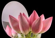 Pink Nelumbo nucifera flowers Royalty Free Stock Image