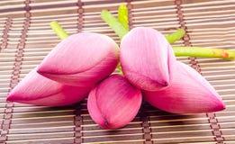 Pink Nelumbo nucifera flowers, close up, isolated, wood background. Royalty Free Stock Photos