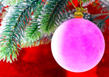 Pink New Year's ball on a Christmas tree Royalty Free Stock Photos