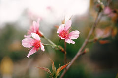 Pink Northern flowers. On tree stock photo