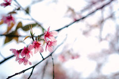 Pink Northern flowers. On tree stock image