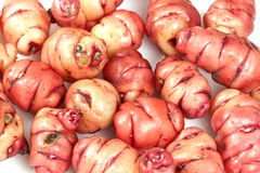 Pink Oca Tubers Stock Images