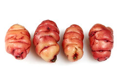Pink Oca Tubers Royalty Free Stock Images