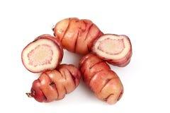 Pink Oca Tubers Stock Image