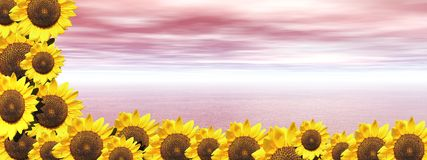 Pink ocean and sunflowers Royalty Free Stock Photos