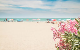 Pink oleander and beach on background suitable as copy space. Royalty Free Stock Images