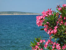 Pink oleander flowers. With blue sea background and island with beach in the back Royalty Free Stock Photography