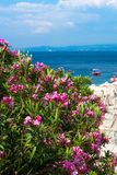 Pink oleander flowers, beach with umbrellas and the blue sea Stock Photography