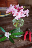 Pink oleander flowers bouquet Stock Images