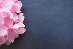Pink oleander flowers close up on black stone background Royalty Free Stock Photos
