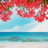 Pink oleanders and blue water Stock Image