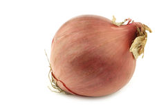 Pink onion Royalty Free Stock Images