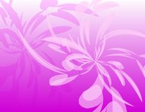 Pink Opaque Wispy Feathers Background Stock Images