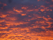Pink and Orange Clouds on a Blue/Purple Sky. Illuminated clouds drift over a purple sky at sunset Stock Photos