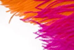 Pink Orange feather Stock Photo