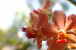 Pink orange orchids under natural lighting Royalty Free Stock Images