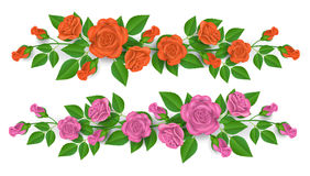 Pink and orange rose border for decoration. Pink and orange rose flower and bud, for frame decoration, with green leaf, isolated on white background Stock Images