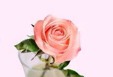 Pink orange rose flower, pattern petals, close up Stock Photography