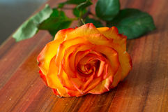 Pink or orange rose on the table Stock Photo