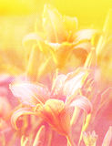 Pink and orange texture with flowers Royalty Free Stock Photo