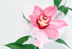 Pink orchid. Isolated on white Stock Photo