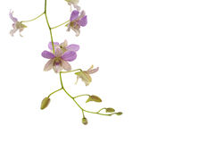 Pink orchid. Border on white Stock Photography