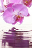 Pink Orchid. Over rippling water Royalty Free Stock Image