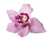 Pink orchid. Isolated on white Stock Image