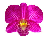 Pink orchid Stock Photos