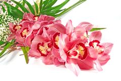 Pink orchid. Flower on white Royalty Free Stock Photos