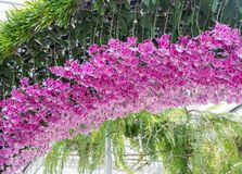 Pink orchid arch. Royalty Free Stock Photo