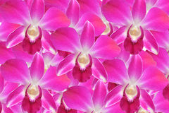 Pink orchid back ground Stock Photo