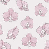 Pink Orchid Background Stock Photography