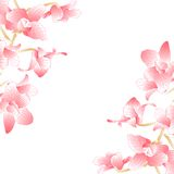 Pink orchid for background or frame Stock Photos