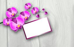 Pink orchid background Royalty Free Stock Photo